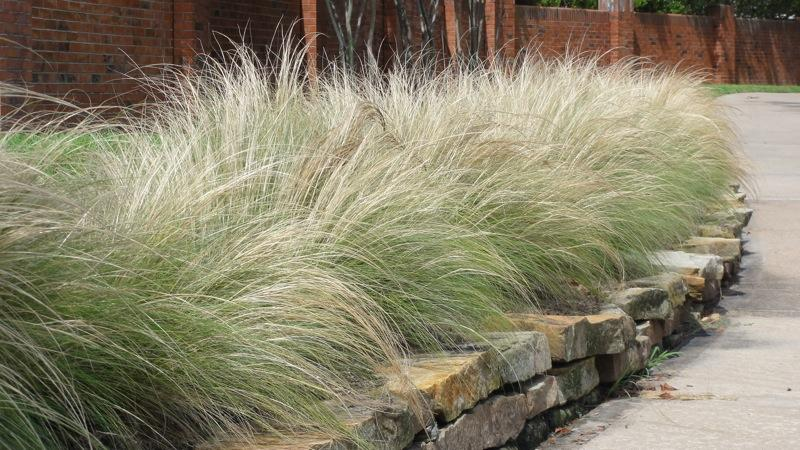 landscaping guidelines boost native plants