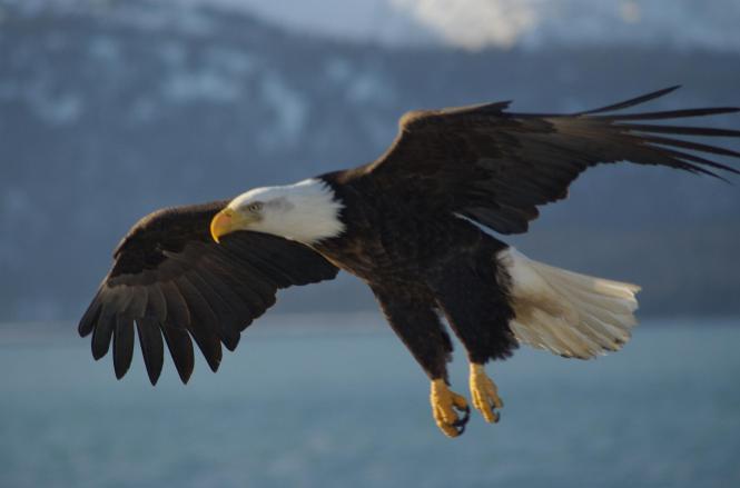 New In 2016 American Eagle Mens Denim Jacket Outerwear Aeo Blue