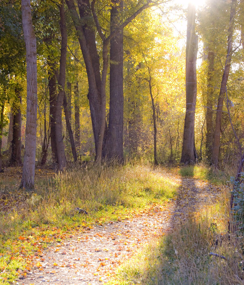 Stressed Science Says Take A Walk In The Woods  MTPR
