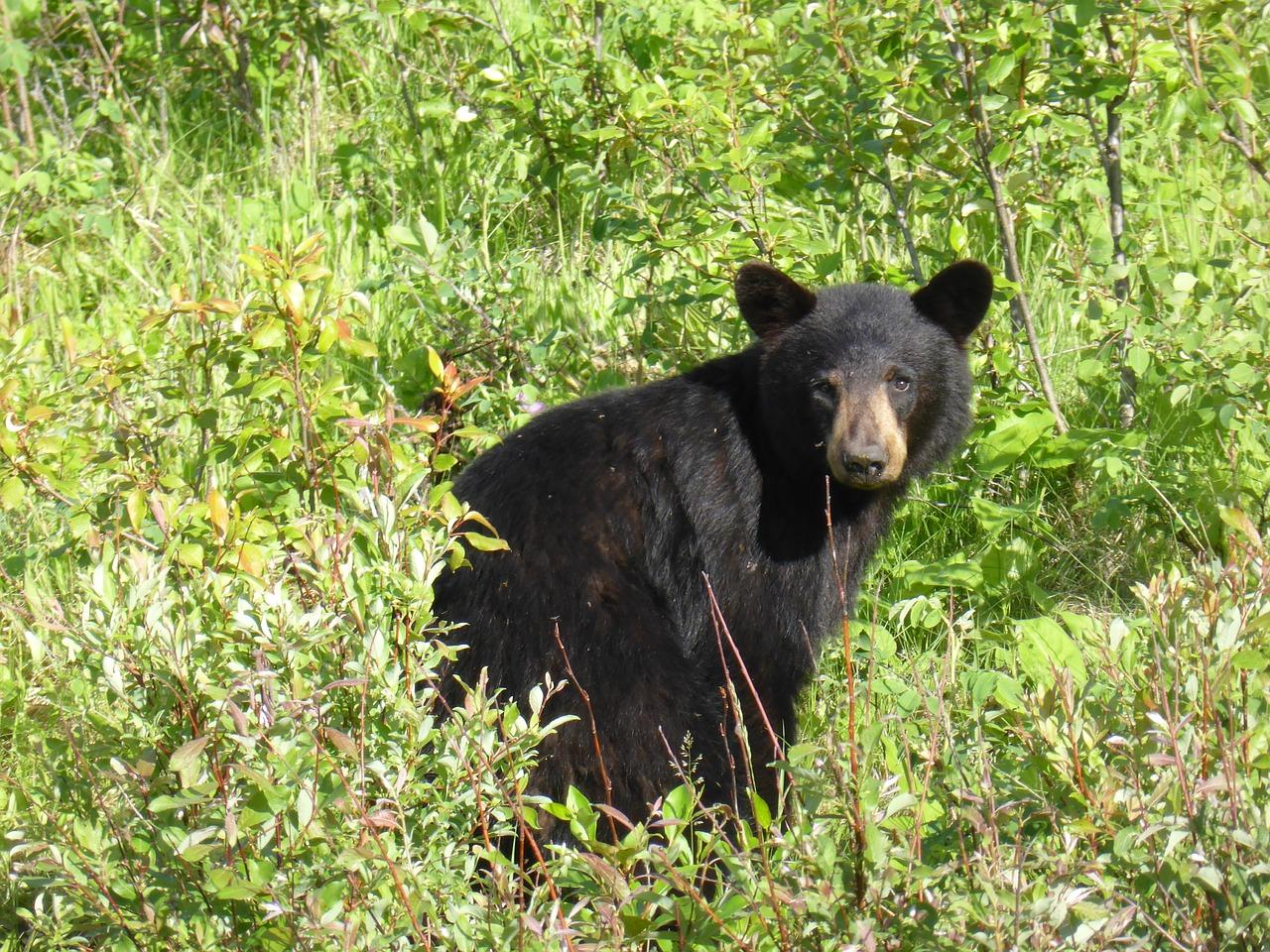 Bear Activity Prompts Garbage Ordinance Crackdown In