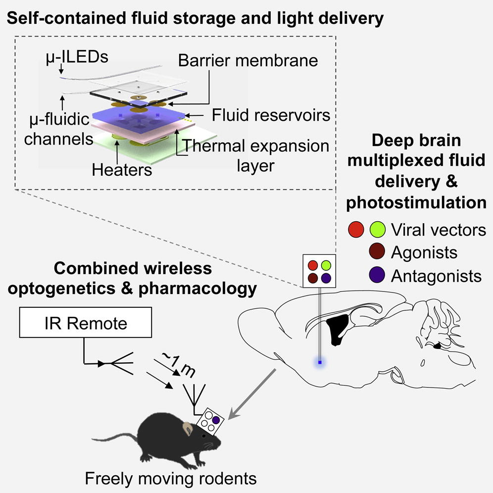 medium resolution of this diagram describes how the new wireless device functions source jeong jw mccall jg et al wireless optofluidic systems for programmable in vivo