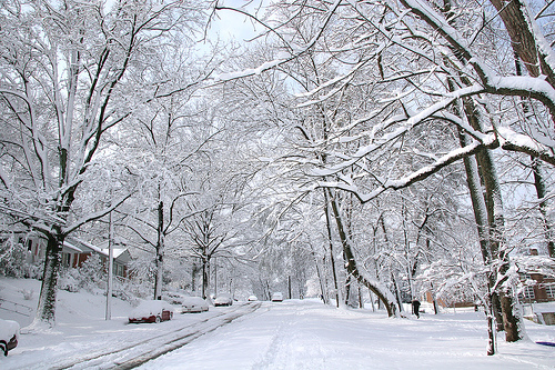 Image result for snow on trees
