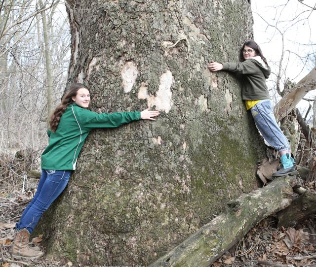 Kindell Covey Left And Her Sister Denae Covey With The Giant Sycamore That Got Kindell The Grand Prize In The Michigan Big Tree Hunt