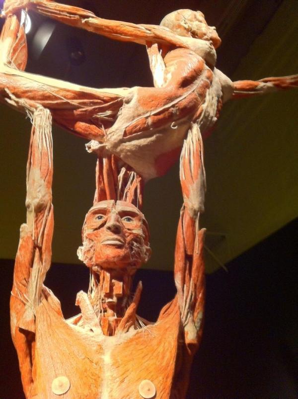 Corpses Visit Kentucky Science Center In Exhibit 'body Worlds Vital' Wkms