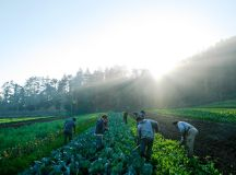 Big Battles Over Farm And Food Policies May Be Brewing As ...