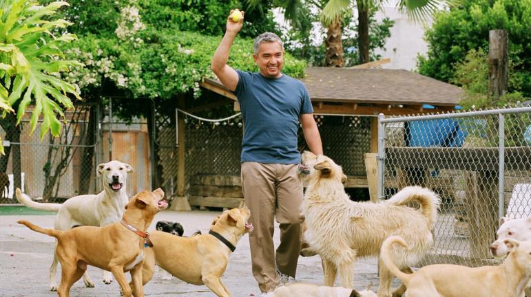 Image result for Dog Whisperer with Cesar Millan