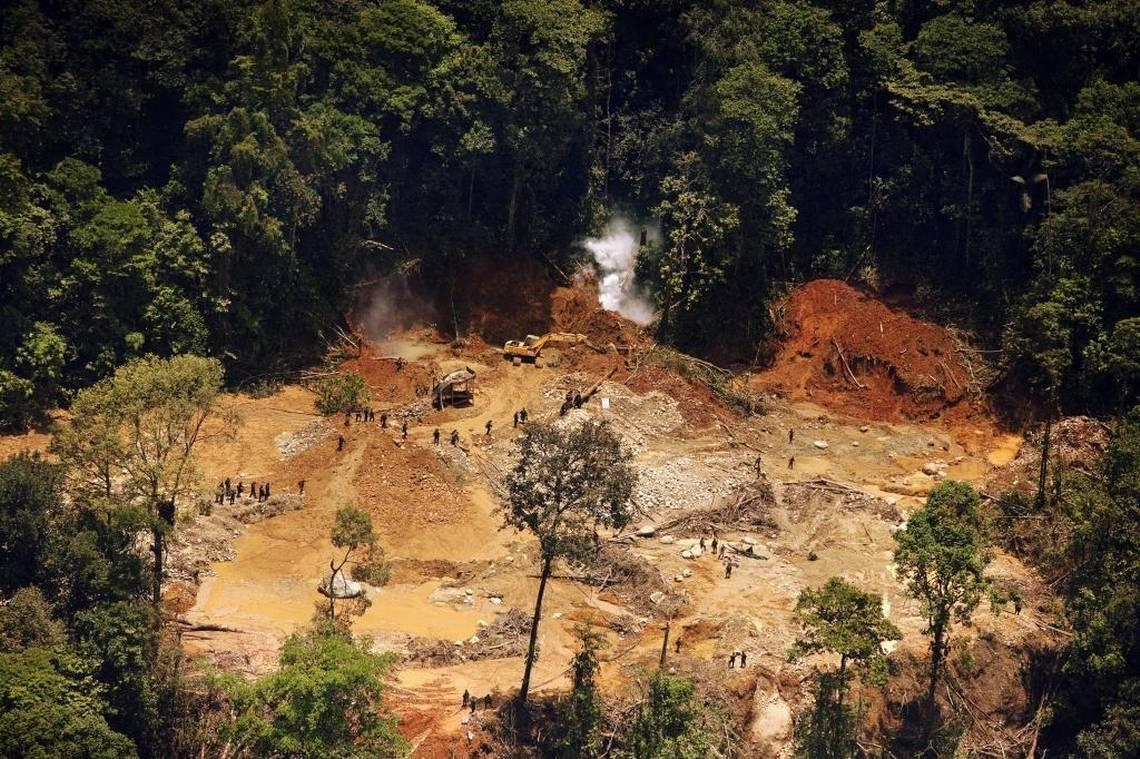New Study Says Deforestation Could Help Viruses Jump From Animals To Humans. Amid COVID-19 Pandemic   Health News Florida