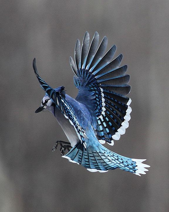 blue jays masters of