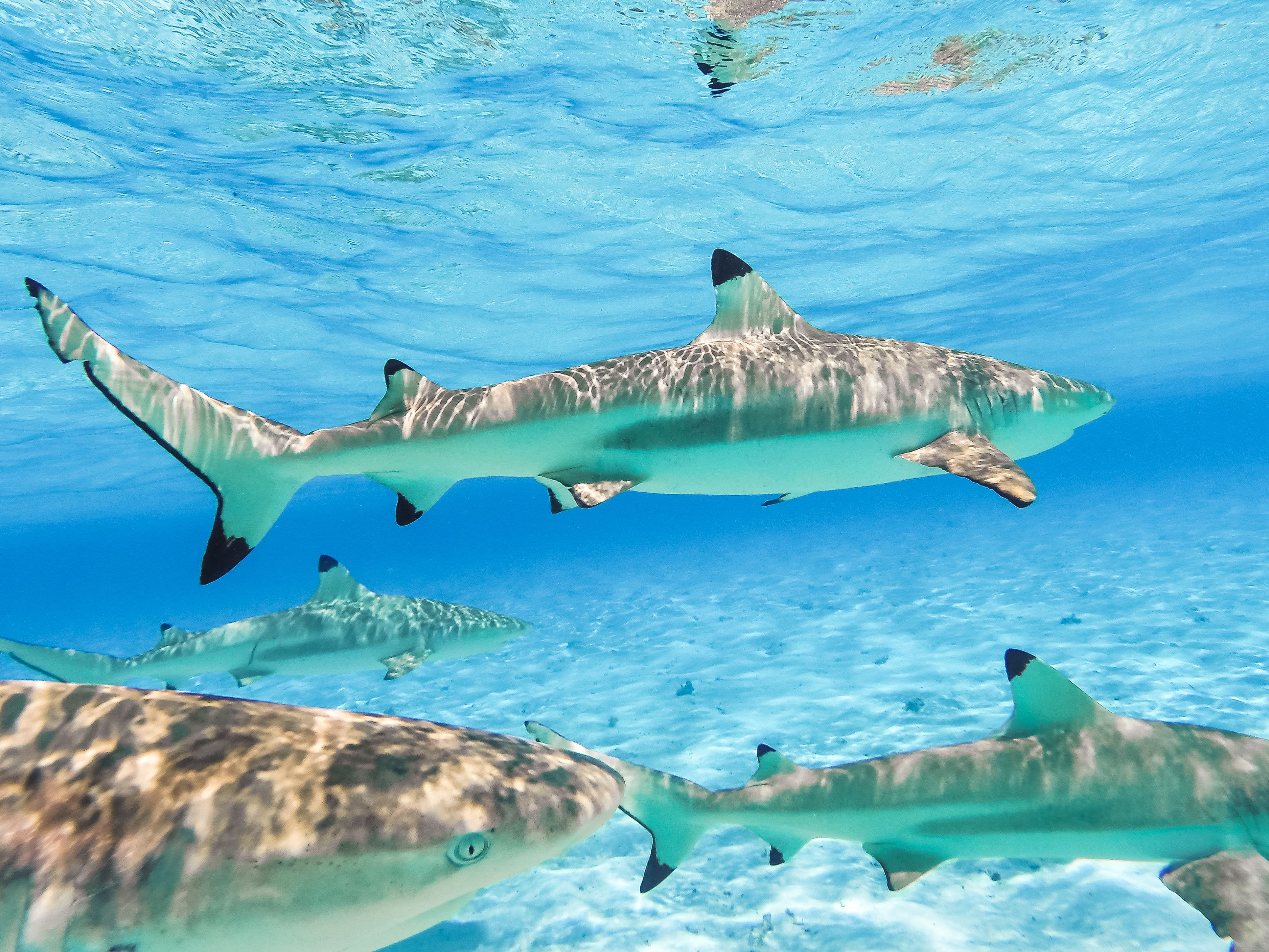 Things To Do In Bora Bora 2019 Top Attractions