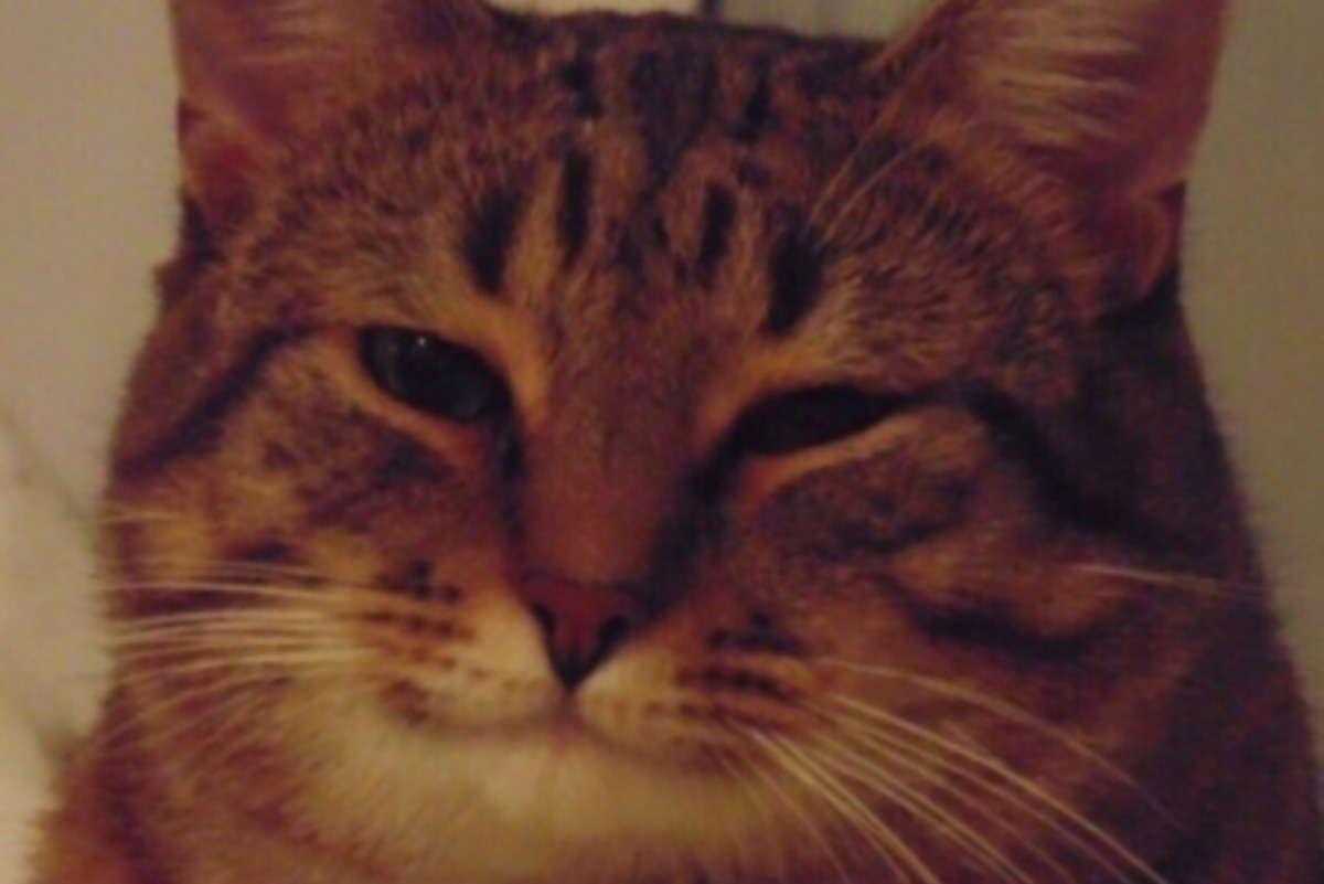 Бездомный кот засунул голову в банку, и очень зря. Впереди его ожидало незабываемое двухнедельное приключение