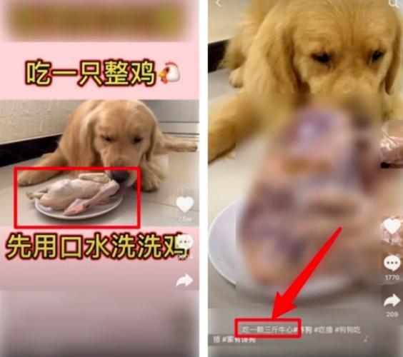 В Китае новый опасный тренд: люди кормят своих собак. Звучит нормально, но есть нюанс - и он в количестве еды