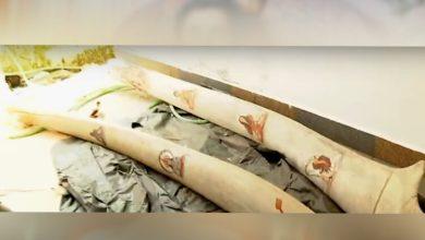 Photo of മോൻസന്റെ പക്കൽ തിമിംഗലത്തിന്റെ അസ്ഥികളും; വാഴക്കാലയിലെ വീട്ടിൽ നിന്ന് അസ്ഥികൾ വനംവകുപ്പ് പിടിച്ചെടുത്തു