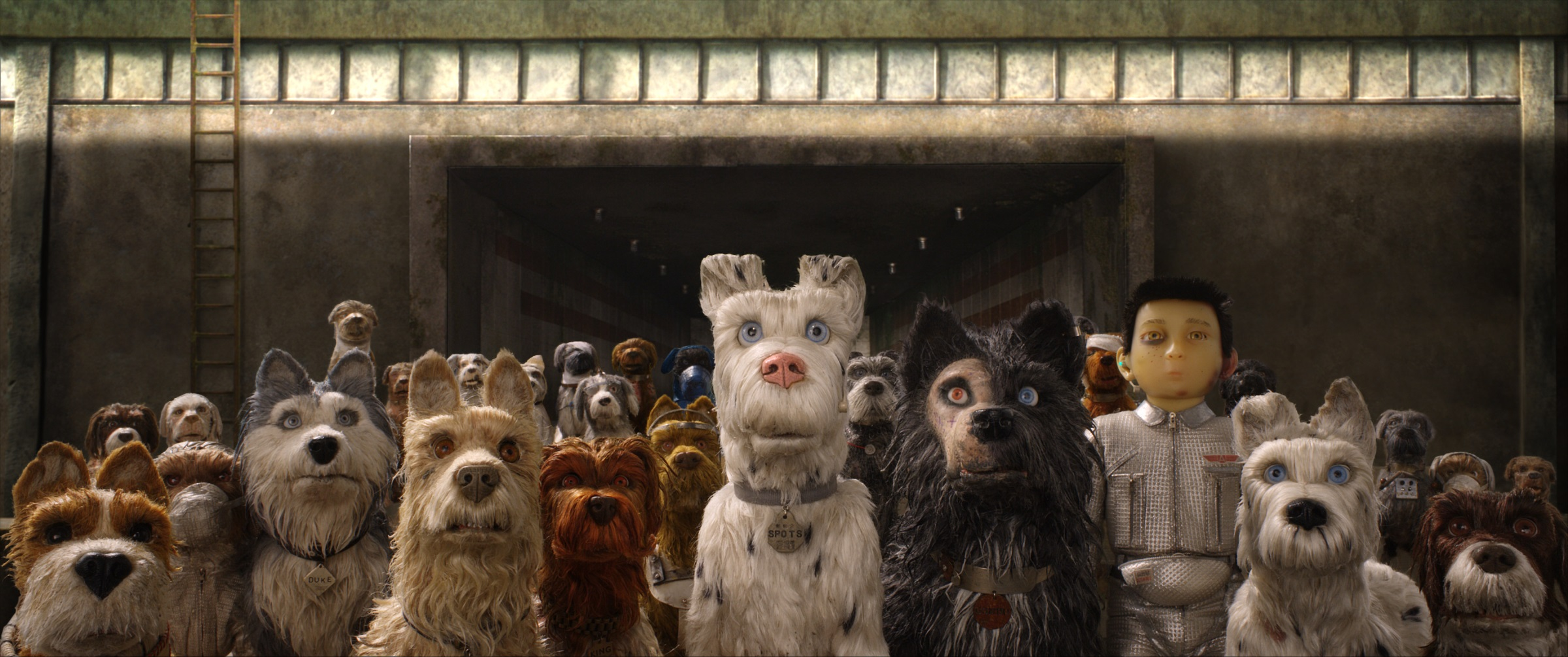 'Isle of Dogs' Delivers an Important Message