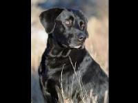hero 9/11 rescue dog dies of cancer