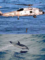 152 dolphins off iranian coast 'suicided' by US sonar