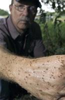'crazy' ants plague texas, fouling electronics