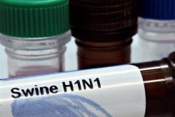 world 'getting closer' to swine flu pandemic