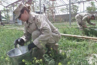 military wants a swine flu greenhouse
