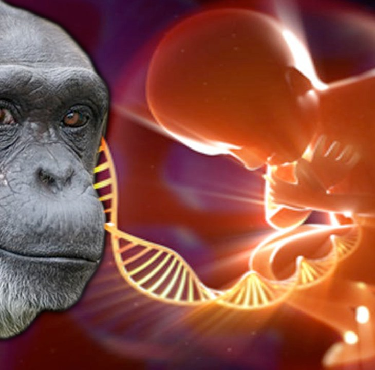 #NewWorldNextWeek: Scientists Announce Human-Monkey Hybrids (Video)