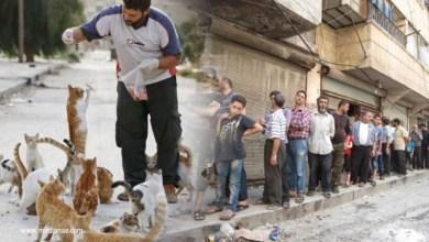 رئيس مجلس مدينة حلب يدعو المواطنين للعناية بالقطط
