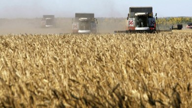 النظام السوري يشتري مليون طن قمح من روسيا