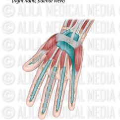 Hand Muscles Diagram Miller Welder Wiring Alila Medical Media And Tendons