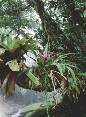 Pour Une Agriculture Du Vivant : agriculture, vivant, Comment, Prserver, Biodiversit, Science