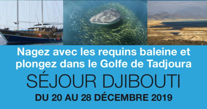 Nagez avec les requins baleine et plongez dans le Golfe de Tadjoura - Séjour Djibouti - du 20 au 28 décembre 2019