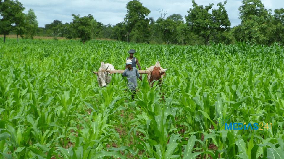 Estuaire, Haut-Ogooué, Ngounié et Woleu-Ntem en pôles agricoles