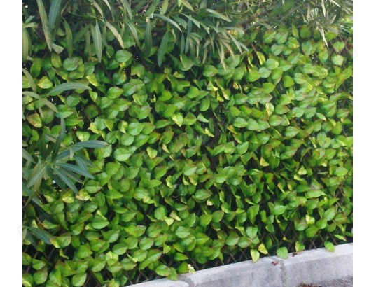 pegane brise vue treillis en feuilles de rosier coloris vert tendre dim 1 00m x 2m pegane ma 82ca601bris bnasb