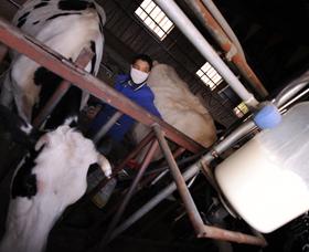 i-57721091753ed3c674279565cc63ae86-milk4.jpg