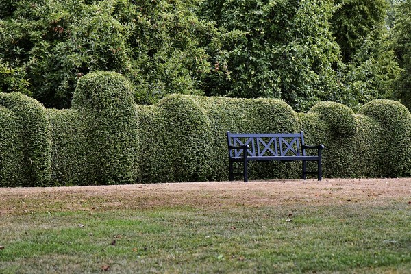 Beautiful border hedges with an iron bench.