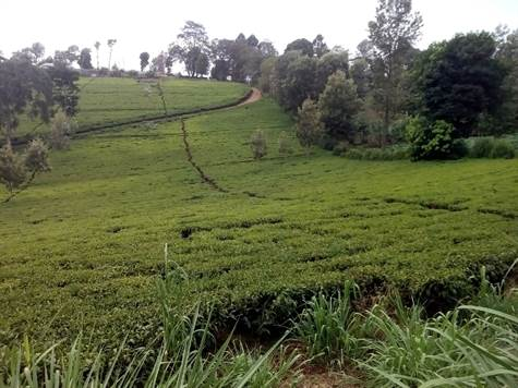 Land For Sale in Tigoni Limuru