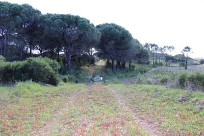 7.5 Hectares with Renovation Property