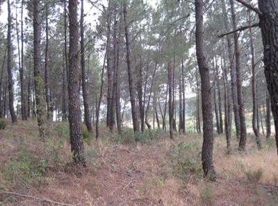 76 Hectares Forestry