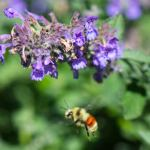 flying-bee-photography-bozeman