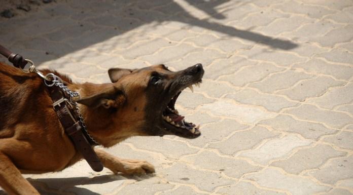 Dog Barking Rabies