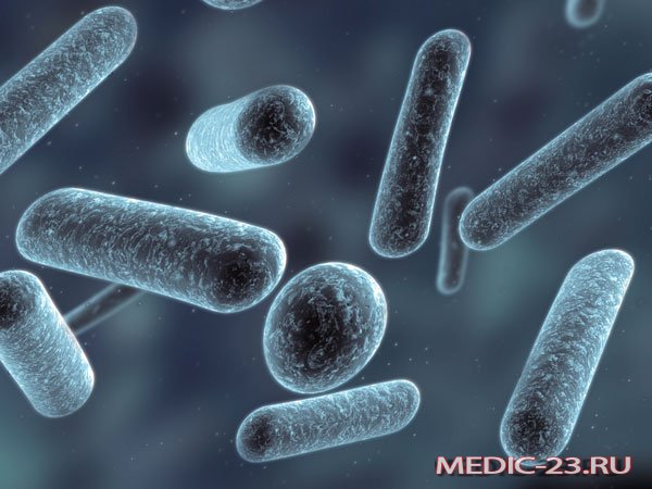 Кисломолочные бактерии