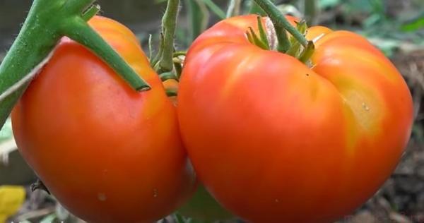 преимущества употребления овощей
