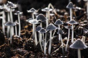 mushrooms-116973_1920