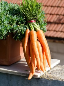 Botte de carottes avec fanes