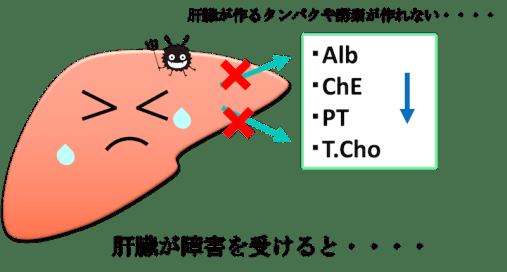 liver function test figure2