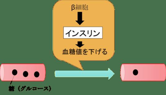 role of pancreas8