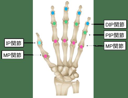 指の骨の関節