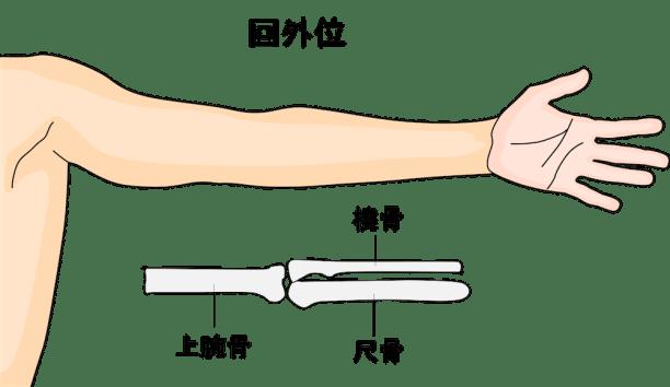 肘関節の回外