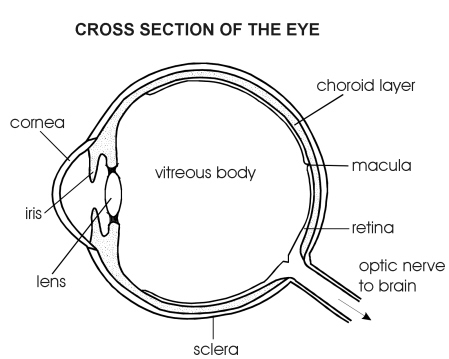 Eye Side View Diagram Patient