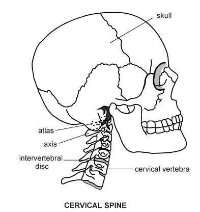 Diagram Of Cervical Spine Diagram Of C Spine