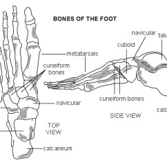 Bones In Your Foot Diagram Rv 50 Amp Wiring 30 Plug Distribution Panel Camper Power Symptom Checker The Norton Medical Practice Metatarsal Fractures There Are Five Each They Long Slim Which Run Length Of To Base Toes