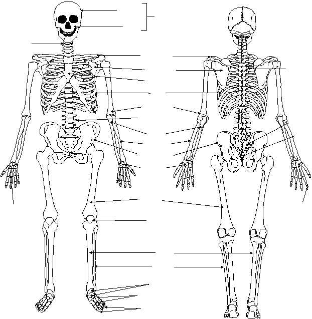 BONE CLASSIFICATIONS