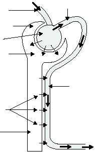 Figure 1-58.The secretion process